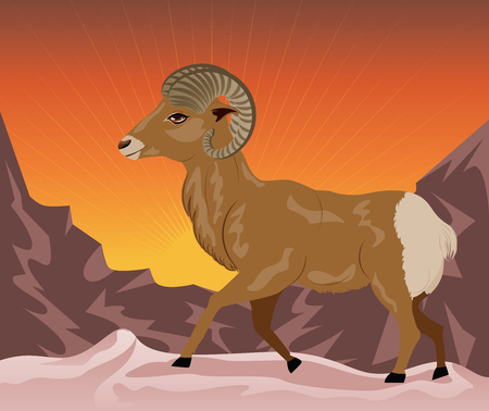 bighorn: Cartoon illustration with wild big horned sheep in the mountains.