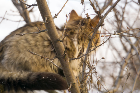 sneak: Winter shot of a curious cat hunting on birds.