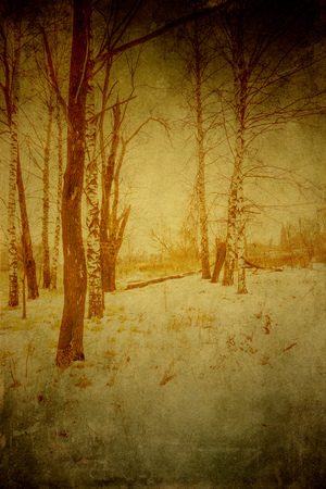 Trees in winter park, old grunge textured background. Stock fotó