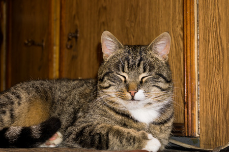 Portrait of a cute tabby cat posing in a living room. photo