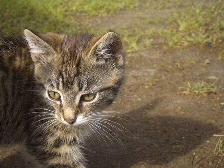 Funny little tabby kitten enjoying a sunny day. photo