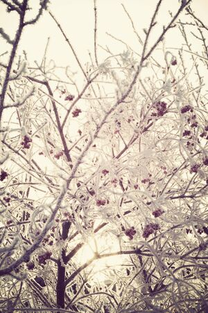 Red rowan berries with ice crystals, winter morning hoarfrost, vintage photo effect. photo