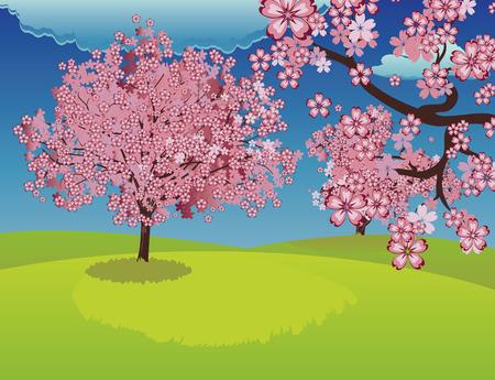 speelveld gras: Roze bloeiende kersenbomen, sakura op de lente grasveld.