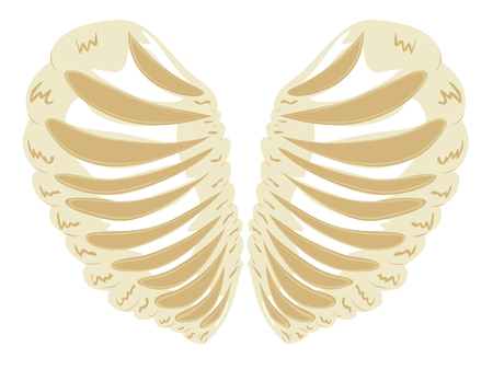 rib cage: Abstract cartoon rib cage, thorax in a shape of a heart.