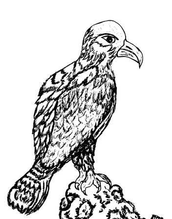 visions of america: Grunge sketch of an eagle, hand drawn illustration.