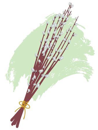 cling: Branches of willow catkins illustration on white background.