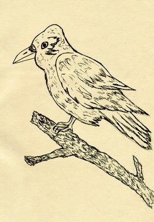 Grunge hand drawn illustration of a big crow sitting on a branch. illustration