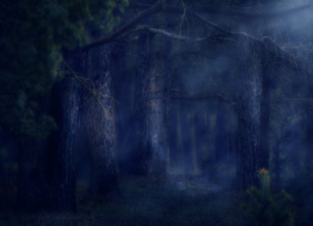 40116808 dark deep magical forest with fog halloween background