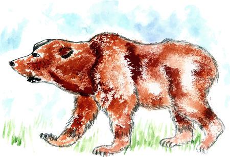 kodiak: Watercolor painting of brown bear, hand drawn illustration. Illustration