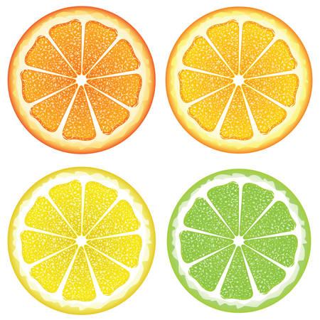 Grapefruit, lemon, orange and lime slices, colorful background. Illustration