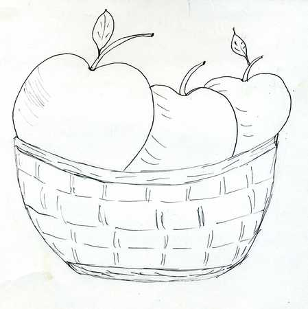 willow fruit basket: Hand drawn illustration of a wicker woven basket with apples.