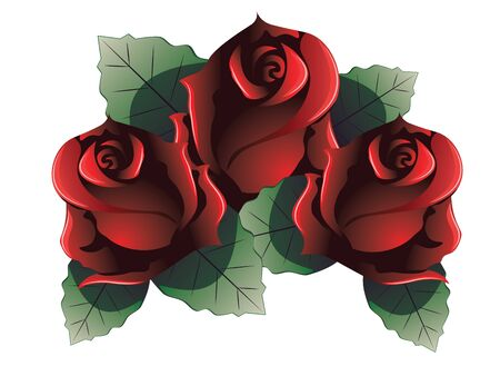 rose flowers: Dark red rose flowers with leaves on white background.