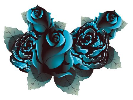 rose flowers: Dark blue rose flowers with leaves on white background.