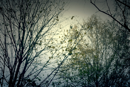 arbre automne: Grunge fall tree branches, natural autumn background.