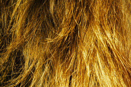 messy hair: Messy hair texture of yellow color as background.