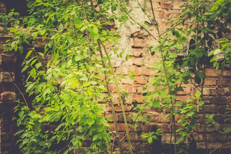 filtered: Old destroyed an abandoned house with brick walls, filtered background.