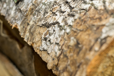 bark peeling from tree: Close up texture of birch bark as grunge background. Stock Photo