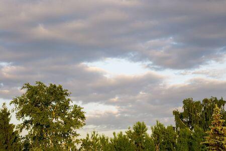 arbol de problemas: copas de los árboles verdes bajo las nubes de tormenta de primavera.