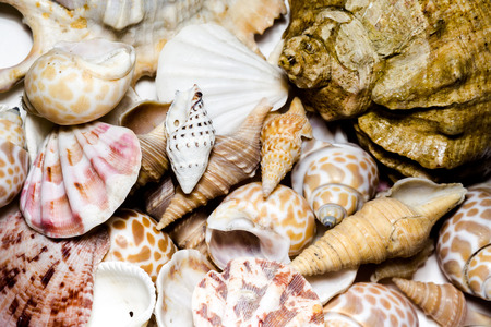 lots of: Lots of different seashells piled together, close up. Stock Photo