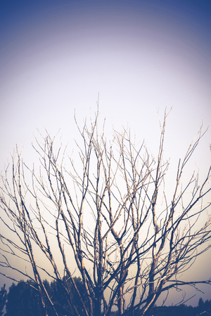 branching: Branching old dead tree over blue sky, filtered background.