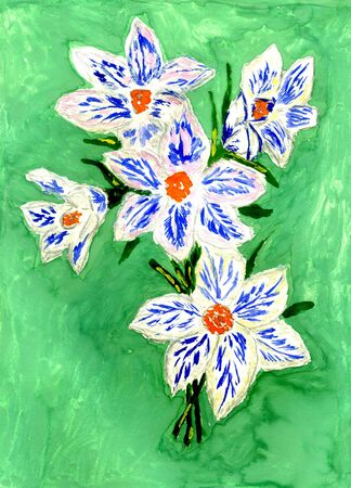 crocus: Spring crocus flowers with leaves, grunge watercolor painting.