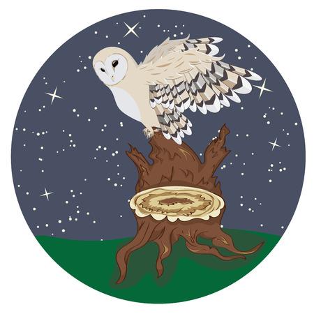 head wise: Cartoon barn owl on a tree stump at night.