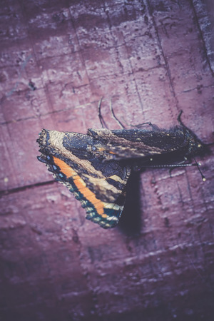 admiral: Red admiral butterfly on an old wooden plank macro.