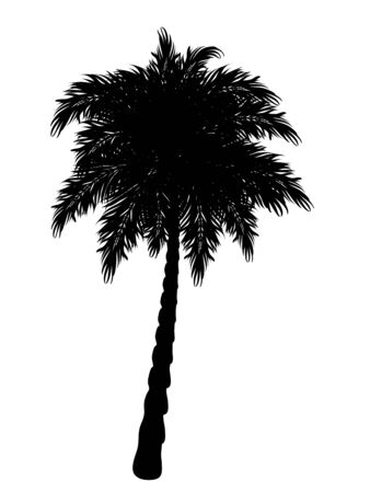 coco: Black silhouette of a tropical palm tree on white background.