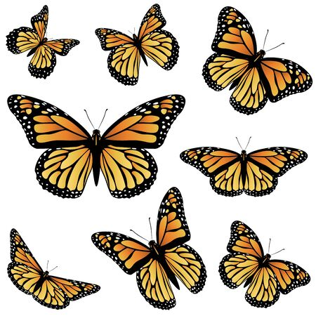 monarch butterfly: Collection of an orange monarch butterfly, different views.