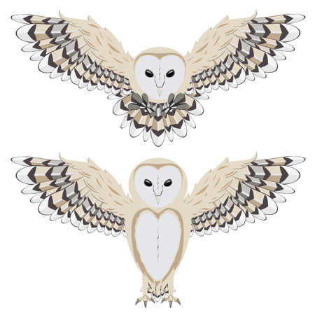 Illustration of cartoon barn owl on white background.