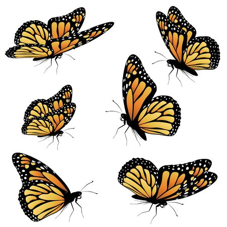 Collection of an orange monarch butterfly, different views.