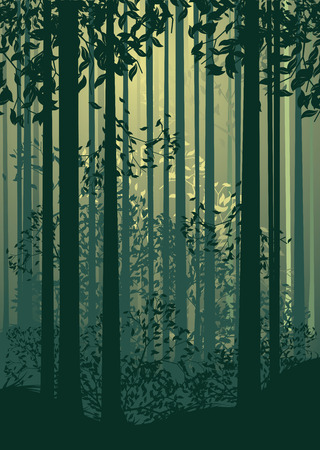 deciduous forest: Deciduous forest landscape with silhouettes of trees and grass in green mist.