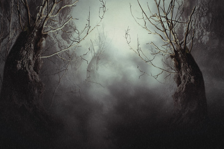 spooky forest: Halloween night background with spooky forest trees in fog.