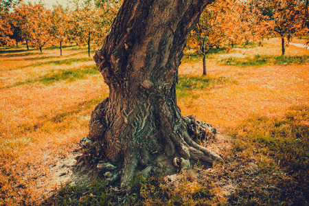 deformed: Old scary tree with deformed trunk in early autumn, vintage effect.