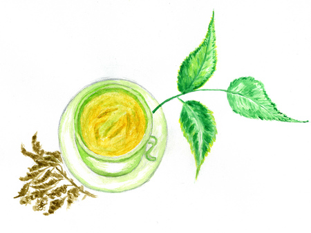 Cup of green tea with leaves hand drawn watercolor illustration.