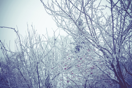 Snowy leafless trees in winter season, filtered natural background.