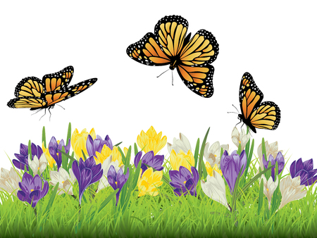 Frühlingsblumen, bunte blühende Krokus mit grünem Gras Design. Standard-Bild - 76196952