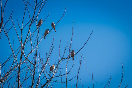 Cute little birds sparrows sit on the tree branches. Reklamní fotografie