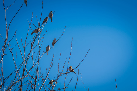 Cute little birds sparrows sit on the tree branches. Stock Photo