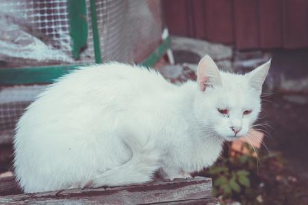 Portrait of a cute white cat, close up photo.