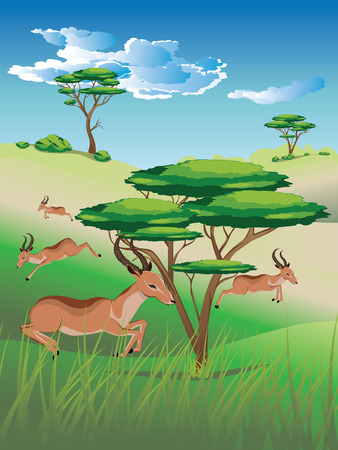 Cartoon sunny landscape with herd of antelopes. Stock Vector - 85245784