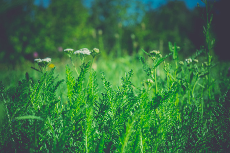 Close up photo of a green grass, filtered natural background.
