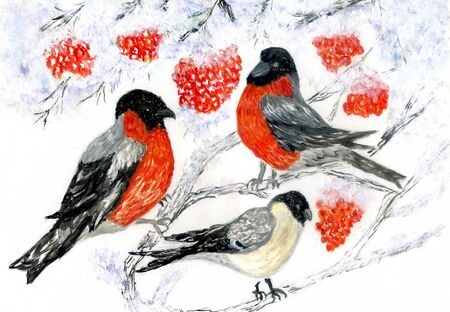 Cute winter birds, bullfinches on the branch of mountain ash in watercolor.