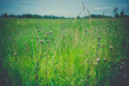 Fresh green grass, filtered nature background, lawn close up.