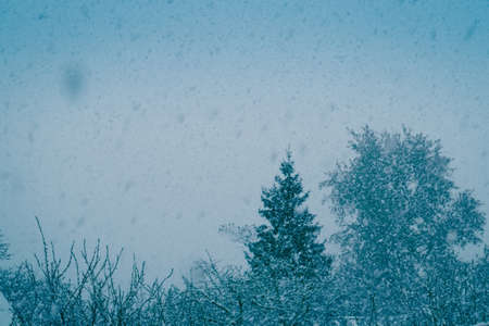 Fresh falling snow and trees, filtered winter background. Stock Photo
