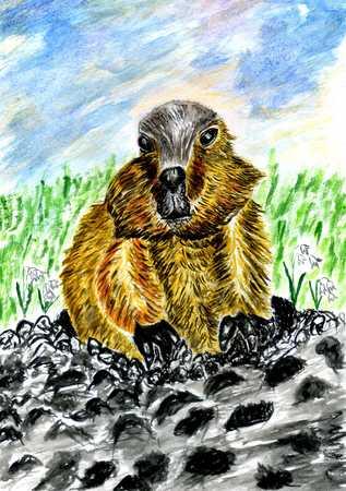 Cartoon brown marmot illustration painted in watercolors. Stock Photo