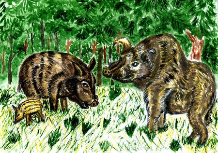 Brown wild boar illustration painted in watercolors.