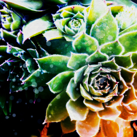 Grunge stylized illustration of a colorful succulent, photo manipulation.