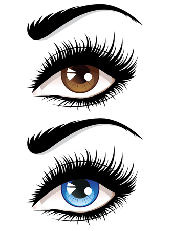 Detailed female eyes with long eyelashes illustration on white background. 일러스트