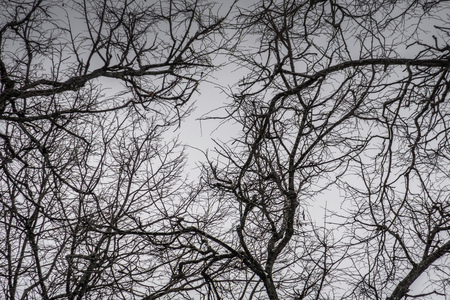 Crooked dark branches of winter trees without leaves in the city park.